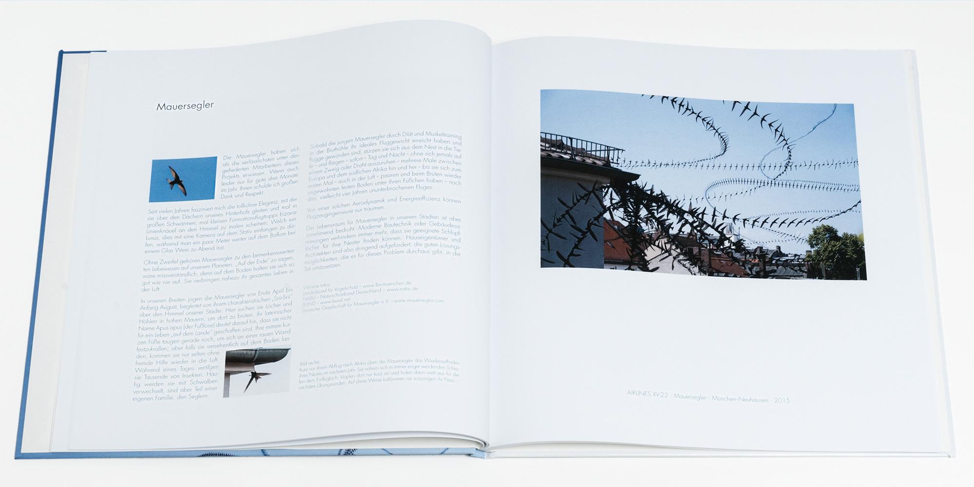 """Katalog """"AIRLINES · Vogelspuren in der Luft"""" · 2., erweiterte Auflage · Innen (Mauersegler)"""