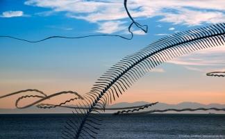 AIRLINES XIV-9 · Möwen vor der Silhouette von Korsika · Pomonte · Elba · 2014