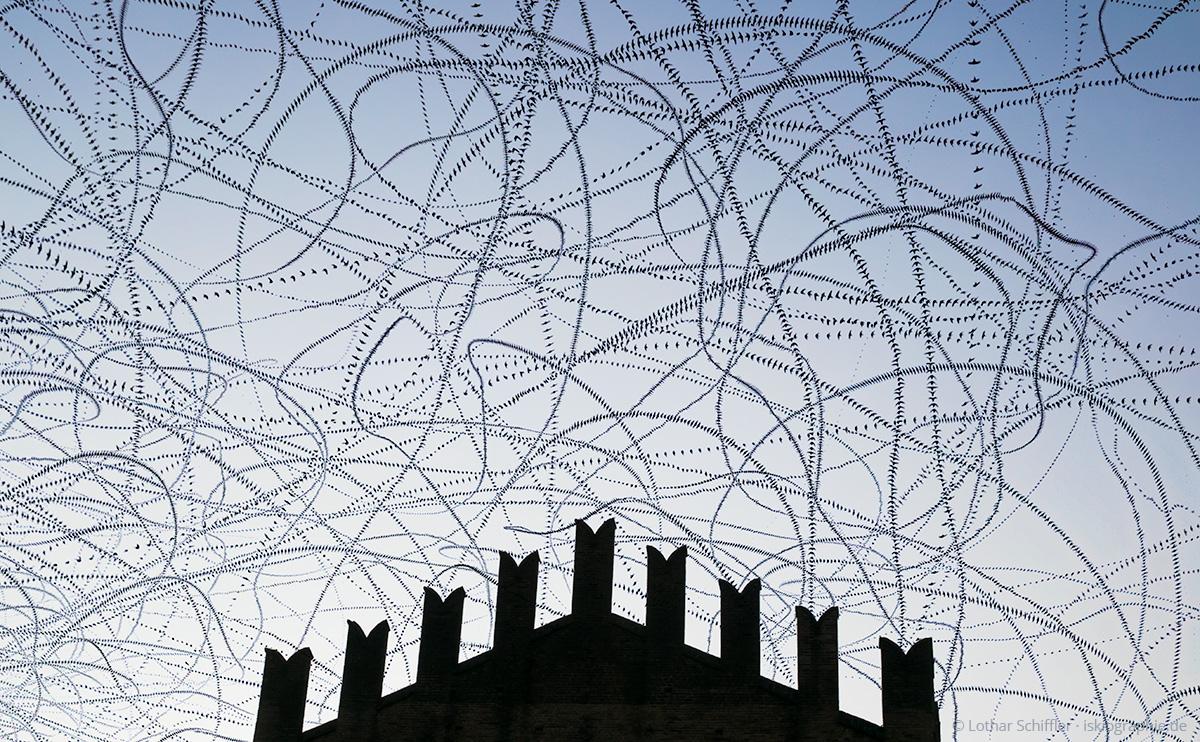 AIRLINES XV-5 · Mauersegler · Palazzo Re Enzo · Bologna · 2015