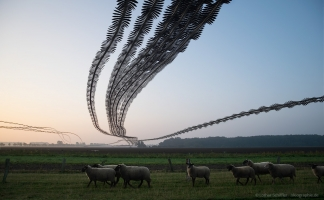AIRLINES XV-29 · Kanadagänse und Schafe · Kinnbackenhagen · Ostsee · 2015