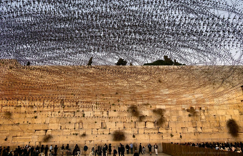 AIRLINES XVIII-4 · Mauersegler an der Klagemauer · Jerusalem · 14. März 2018 · 48 Sekunden