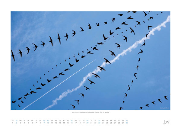 AIRLINES - Vogelspuren in der Luft - Iskiographien von Lothar Schiffler - Kalender 2019 DIN A2 quer - Juni