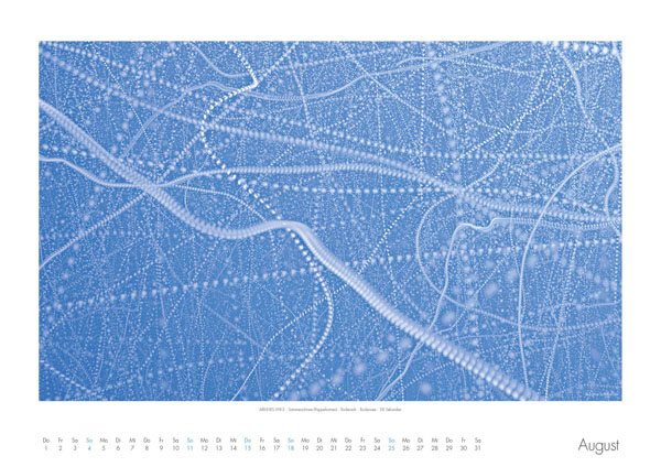 AIRLINES - Vogelspuren in der Luft - Iskiographien von Lothar Schiffler - Kalender 2019 DIN A2 quer - August