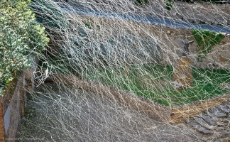 AIRLINES XVII-16 · Samenflug einer Feldulme · Arquà Petrarca · Italien · 49 Sekunden
