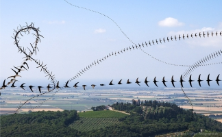 AIRLINES XIX-26 · Mauersegler über Zypressenhügel · Campiglia Marittima · 10 Sekunden