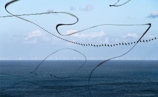 AIRLINES XIX-40 · Uferschwalben · Møns Klint · Dänemark · 26 Sekunden