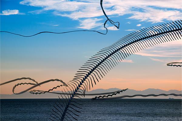 AIRLINES XIV-9 · Möwen vor der Silhouette von Korsika · Pomonte · Elba · 1:50 Minuten